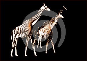 Night In Africa Royalty Free Stock Photo - Image: 9975575