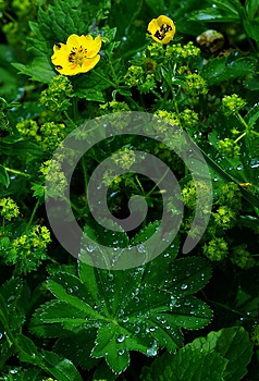 Meadow After Rain Stock Image - Image: 9975921
