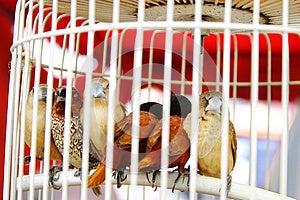Ptak Klatka Fotografia Royalty Free - Obraz: 9976057