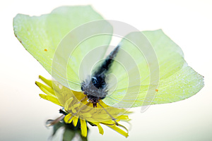 Yellow Butterfly Stock Image - Image: 9976271