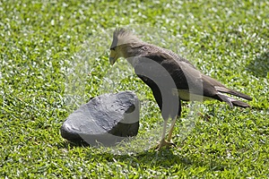 Bird And A Stone Stock Photo - Image: 9990610