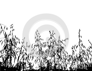 Field Under Of Grass And Cereals Royalty Free Stock Images - Image: 9993629