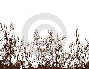 Field Under Of Grass And Cereals Royalty Free Stock Photography - Image: 9993637